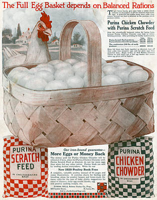 American Food Painting - Ad Purina, 1919 by Granger