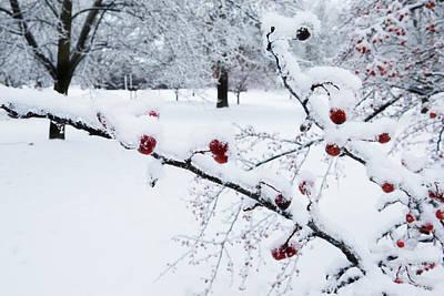 Moody Trees - Ada Park Berries in Winter by Evie Carrier