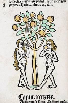 Eve Photograph - Adam And Eve by Paul D Stewart