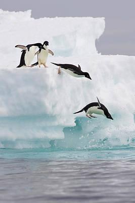 Adelie Penguins Diving Off Iceberg Art Print by Suzi Eszterhas