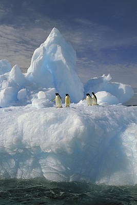 Photograph - Adelie Penguins On Iceberg Antarctica by Colin Monteath