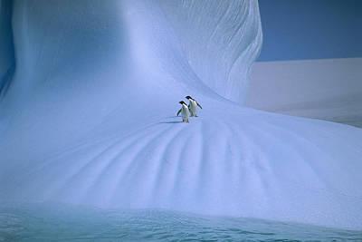 Penguin Photograph - Adelie Penguins On Iceberg Antarctica by Peter Sinden