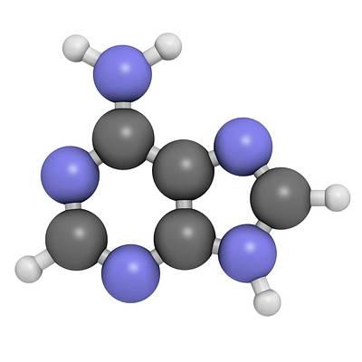 Adenine Purine Nucleobase Molecule Art Print by Molekuul