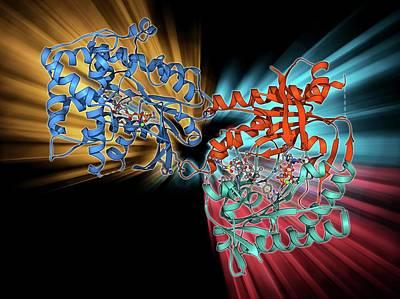 Molecular Structure Photograph - Adenylyl Cyclase Enzyme Molecule by Laguna Design