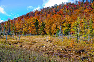 Trees Photograph - Adirondack Color by David Patterson