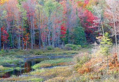 Photograph - Adirondack Fall by Mariarosa Rockefeller