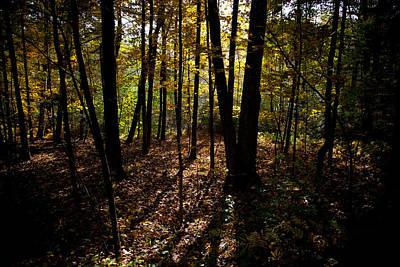Photograph - Adirondack Light by David Patterson