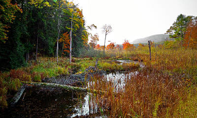 Photograph - Adirondack Pond Iv by David Patterson