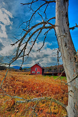 Photograph - Adirondack Red by Emily Stauring