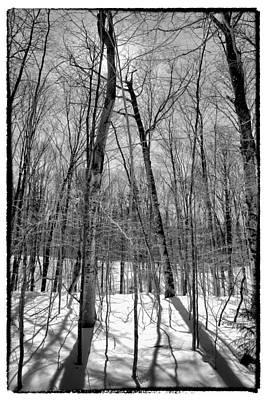 Black And White Photograph - Adirondack Shadows II by David Patterson
