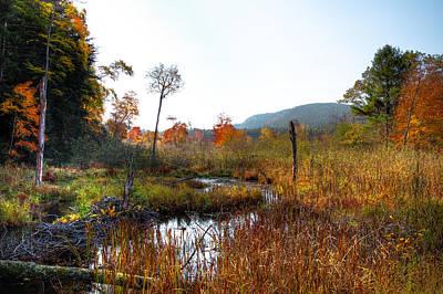 Photograph - Adirondack Stream by David Patterson