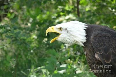 Art Print featuring the photograph Adler Raptor Bald Eagle Bird Of Prey Bird by Paul Fearn