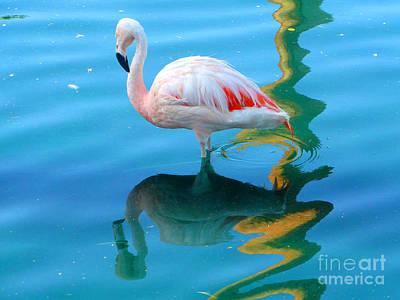 Tinawenger Photograph - Admiring Its Reflection by Tina M Wenger