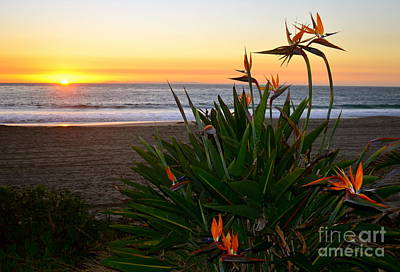 Photograph - Admiring The Sunset by Johanne Peale