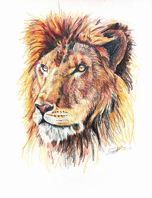 Bombelkie Drawing - Adolescent Lion by Marcin and Dawid Witukiewicz
