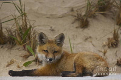 Photograph - Adorable Baby Fox by Amazing Jules