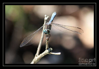 Dragonfly Eyes Photograph - Adorable Dragonfly With Border by Carol Groenen