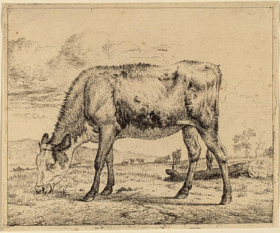 1636 Drawing - Adriaen Van De Velde Dutch, 1636 - 1672 by Quint Lox