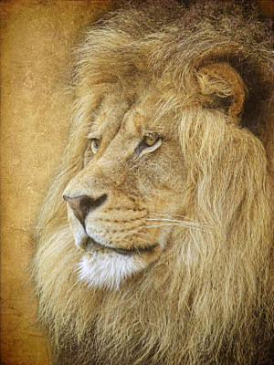 Photograph - Adult Male Lion by Steve McKinzie