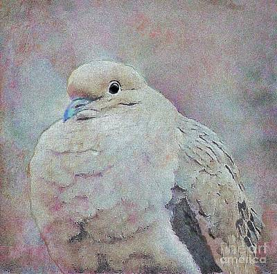 Digital Art - Adult Mourning Dove by Janette Boyd