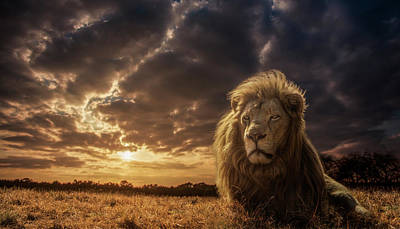 Adventure Photograph - Adventures On Savannah - The Lion King by Jackson Carvalho