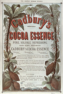 Tea And Coffee Painting - Advertisement For Cadburs Cocoa Essence From The Graphic by English School