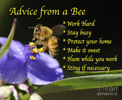 Photograph - Advice From A Bee 2 by Nancy Greenland