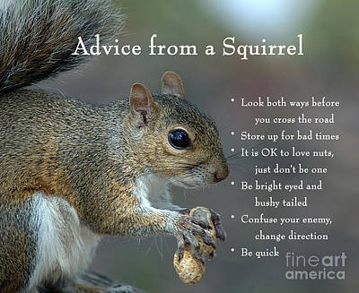Photograph - Advice From A Squirrel by Nancy Greenland