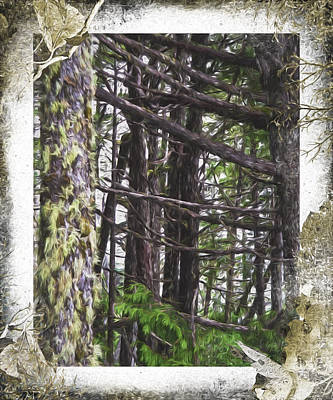 Photograph - Advice From A Tree - Nature Art by Jordan Blackstone