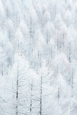 Hoar Frost Photograph - Ae??ae??i??seijyoui?? by Syouta Nagase
