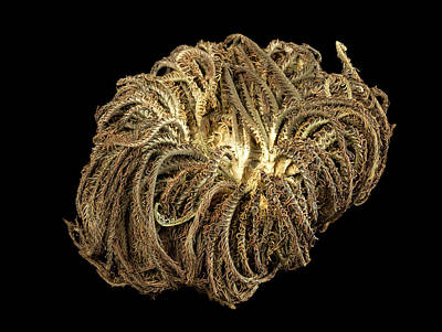 Medusa Photograph - Aequorea Pensilis by Natural History Museum, London