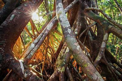 Tropical Rainforest Photograph - Aerial Tree Roots by Alex Hyde