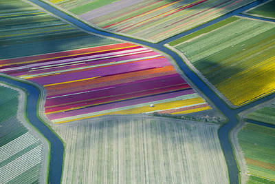 Green Color Photograph - Aerial View Of Flower Fields In Spring by Frans Sellies