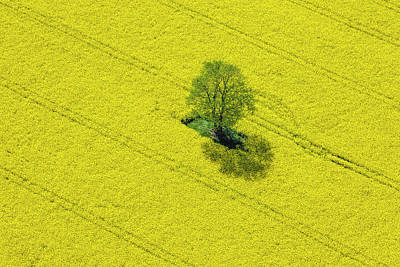 Photograph - Aerial View Of Oilseed Rape Field by Cinoby