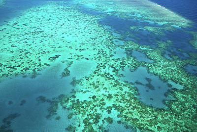 Aerial View Of The Great Barrier Reef Art Print by Miva Stock