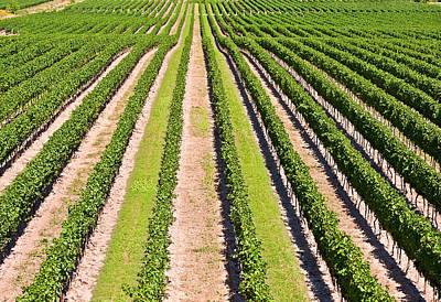 Aerial View Of Vineyard In Ontario Canada Art Print by Marek Poplawski