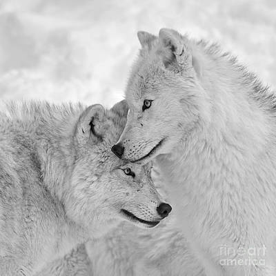 Photograph - Wolf Love  by Joshua McCullough