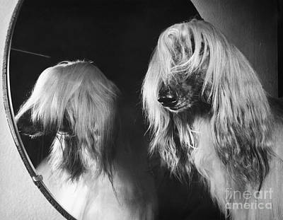 Photograph - Afghan Hound by ME Browning