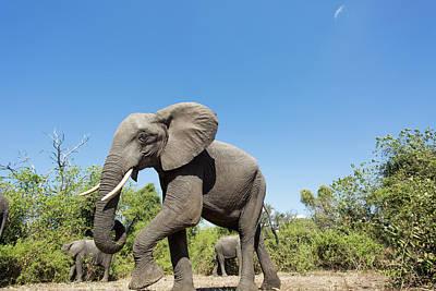 Africa, Botswana, Chobe National Park Art Print by Paul Souders
