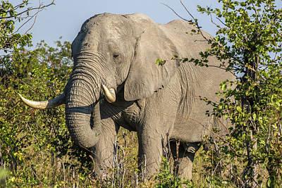 Africa, Botswana, Savute Game Reserve Art Print by Jaynes Gallery