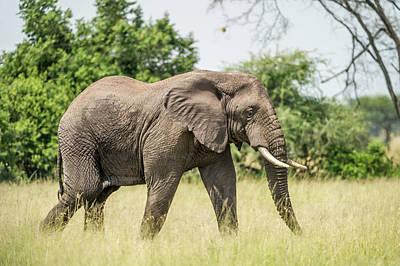 Africa, Elephant Art Print