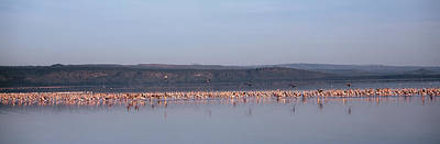 Africa, Kenya, Lake Nakuru National Art Print by Panoramic Images