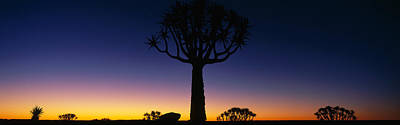 Africa, Namibia, Kokerboom Preserve Art Print by Panoramic Images