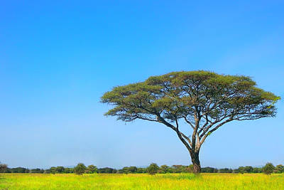 Trees Photograph - Africa by Sebastian Musial