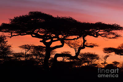 Photograph - Africa Sunrise by Chris Scroggins