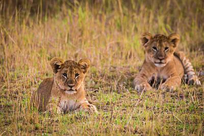 Africa Tanzania African Lion Cubs Art Print