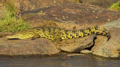 Africa Tanzania Nile Crocodile Basks Art Print