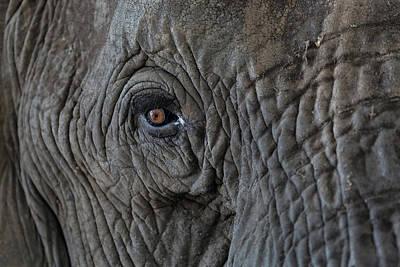 Africa, Zambia Close-up Of Elephant's Art Print