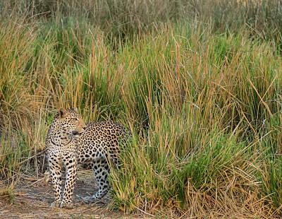 Africa, Zambia Close-up Of Leopard Art Print