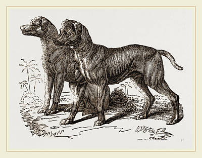 African Blood-hounds Art Print by Litz Collection